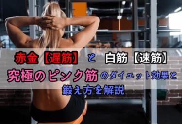 赤筋【遅筋】と白筋【速筋】ピンク筋【中間筋】のダイエット効果と鍛え方を解説